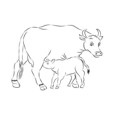 Cow And Calf Outline Vector Silhouette Illustration Sketch Hand Drawn Vector Cow Feeding Calf. Ilustração