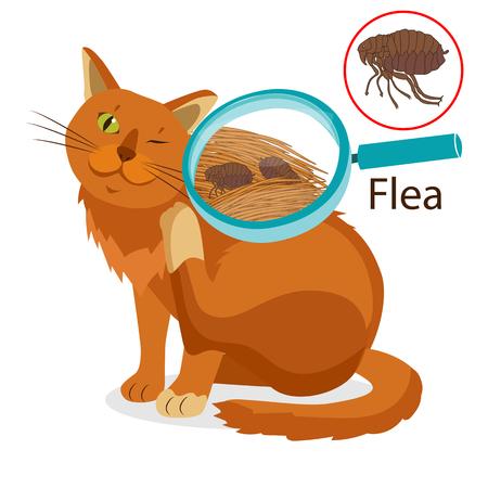 Cat Parasite. Pet Flea Treatment. Flea In The Fur As A Close Up Magnification Vector. Spread Of Infection. Pet Veterinary Medicine Vector. Flea Control for Cats.