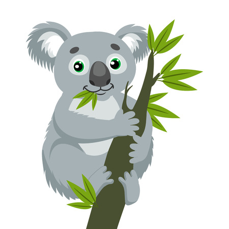 Koala Bear On Wood Branch With Green Leaves. Australian Animal Funniest Koala Sitting On Eucalyptus Branch. Cartoon Vector Illustration. Iconic Marsupials. Illustration