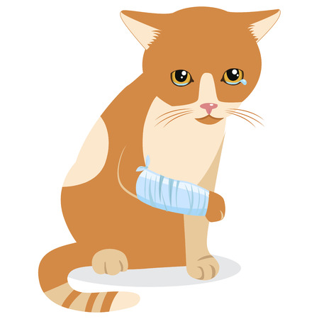 Cry Cat With Splinting Leg. Sad Crying Cat Cartoon Vector Illustration. Emotional Catty Face. Tears Of Despair. Kitten Wants To Come In. Sadness Life.