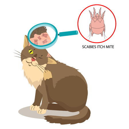 Parasite Of The Skin. Cat Parasites Vector. Itch Mite. Sarcoptes Scabiei. On Cat In The Fur As A Close Up Magnification. Pet Veterinary Medicine Vector.