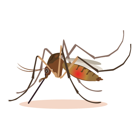 Mosquito icon vector. Realistic Mosquito on white background vector design. A Massive Mosquito Problem.  イラスト・ベクター素材