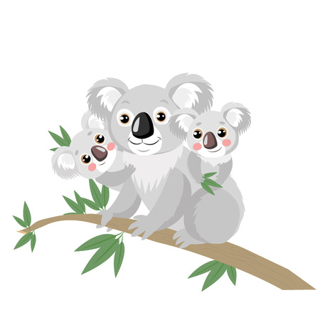 Koala Family On Wood Branch With Green Leaves. Australian Animal Funniest Koala Sitting On Eucalyptus Branch. Cartoon Vector Illustration. Koalas Are Not A Type Of Bear. 일러스트