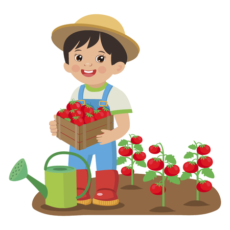 Cute Cartoon Boy With Harvest Tomato. Young Farmer Working In The Garden. Colorful Simple Design Vector. Cartoon Boy Holding Tomatoes.