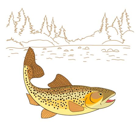 Fishing emote. Brown Trout Fish Realistic drawing Vector illustration. American trout swimming in water isolated on white. Salmo trutta freshwater fish. Fishing theme vector.
