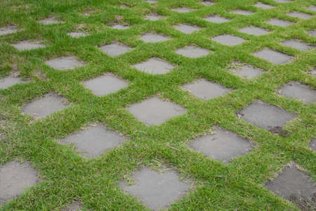 Grass floor texture and background