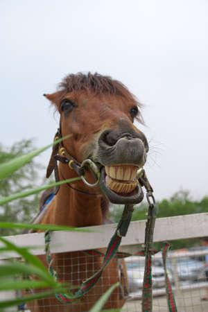 animalitos tiernos: Caballo con un sentido del humor Foto de archivo