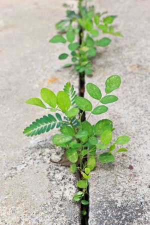 Trees sprout push through cement Stock Photo