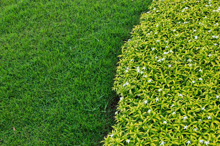 green grass background and wallpaper