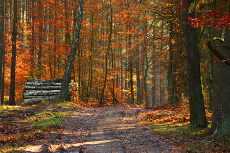 Save Download Preview Dirt road in the autumn mixed forest. Stock Photo