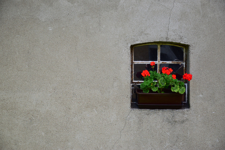 Red geraniums in a flower-pot on the windowsill. Stock Photo