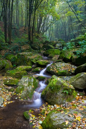 dead wood: net forest brook flows into the dead wood Stock Photo