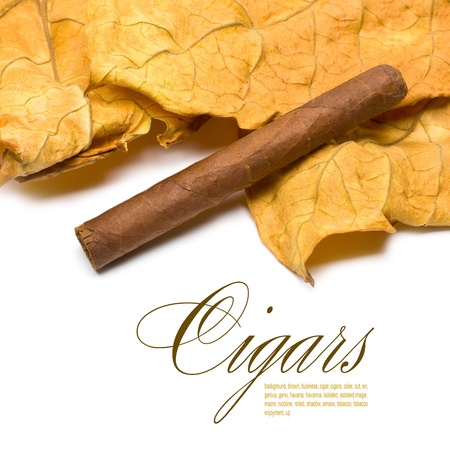 smoking cigar: Close-up on the cigar tobacco leaves with space for text Stock Photo