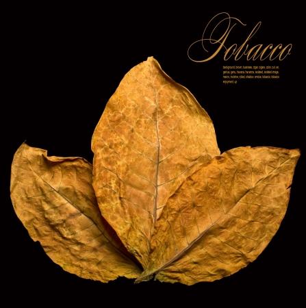 cigarro: seca las hojas del tabaco primer plano sobre el fondo negro