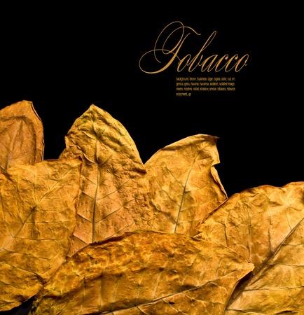 tobacco: dry leafs tobacco closeup on the black backgroun