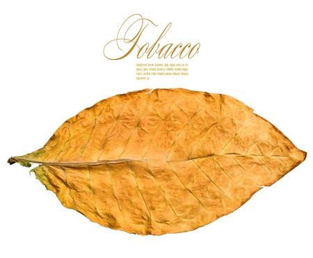 hojas secas: hoja seca de tabaco en primer plano el fondo blanco Foto de archivo