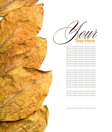 cigars: dry leafs tobacco on white background