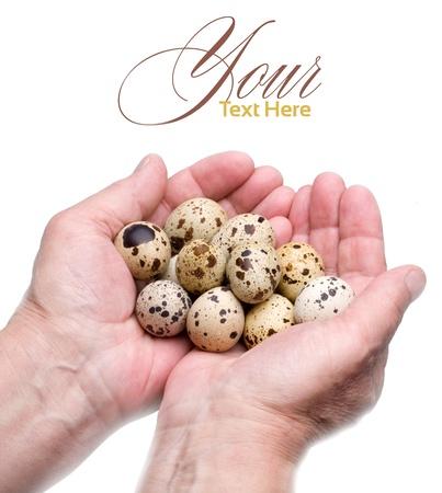 huevos de codorniz: Huevos de codorniz en sus manos, fondo blanco, blanco