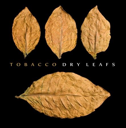 tobacco plants: dry leafs on black background Stock Photo