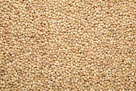 pearl barley: barley background, overview top Stock Photo