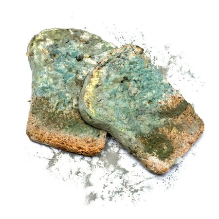 black mold: Photo of a piece of the gray bread, covered a mold  on a white background