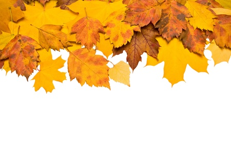 autumn background: Autumn background of colored leafs border isolated