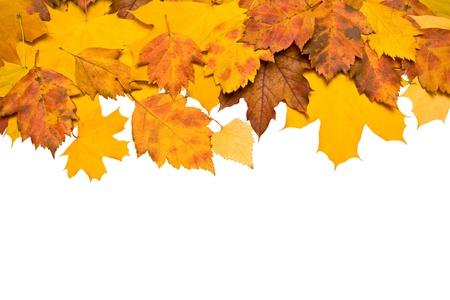 the dry leaves: Fondo de oto�o de hojas de color frontera aislado Foto de archivo