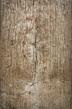 old texture: old wood texture background
