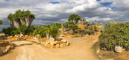 mallorca: Cacti at Bontanicactus,Ses Selines, Mallorca, Spain Editorial
