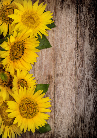 top veiw: Sunflowers on wooden background  top veiw Stock Photo