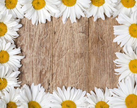 garden frame: Daisy chamomile flowers frame on wooden garden table. Top view with copy space Stock Photo