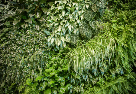 Green leaf wall texture background