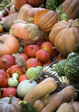harvest background: Diverse assortment of pumpkins background. Autumn harvest. Stock Photo