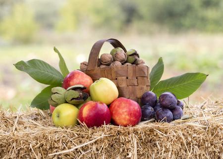 harvest time: Harvest time, apples, nuts, plums, seledtiv focus