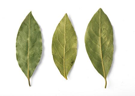 Gedroogde laurierbladeren die op wit met het knippen van weg