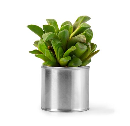 Decoration plant on metal pot isolated on white background
