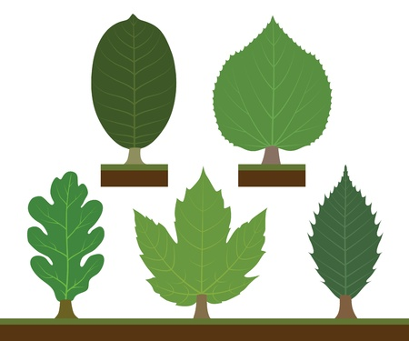 leaved: Walnut, linden, oak, maple and chestnut Illustration