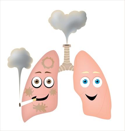 alveolos: Diferentes estilos de vida  Vectores