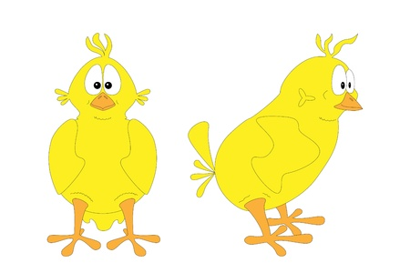 Isolated chick; two views  Vector