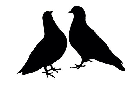 Pigeons 向量圖像