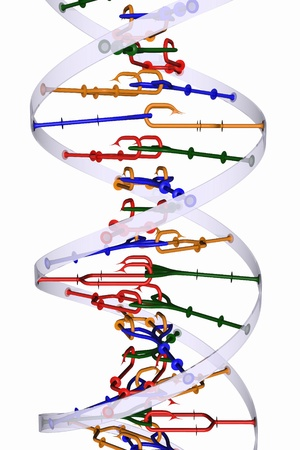 Isolated DNA helix photo