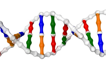 adenine: DNA helix - white background