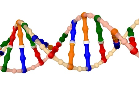 double helix: DNA - isolated on a white background