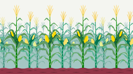 Seamless isolated cornfield vector design. Illustration