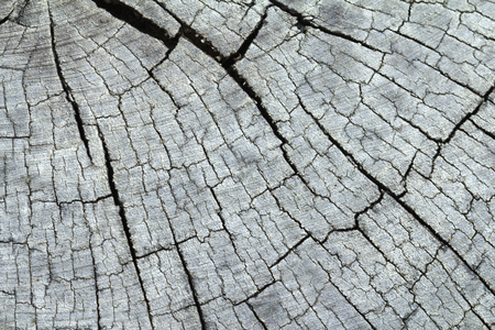 wood surface: Wood cracked surface, cross section