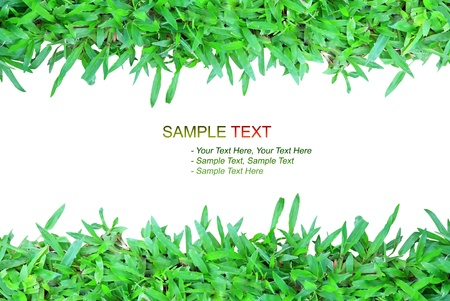 nature grass frame on white background isolated style Stock Photo - 8446120