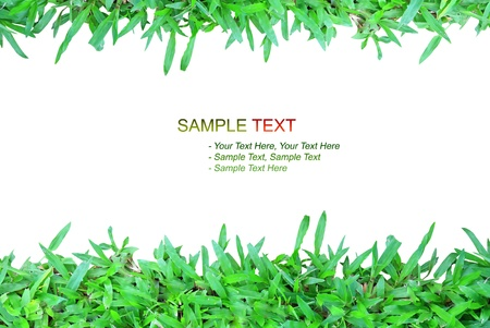 nature grass frame on white background isolated style Stock Photo - 8446110