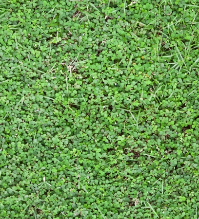 lawn verdant for design or background photo