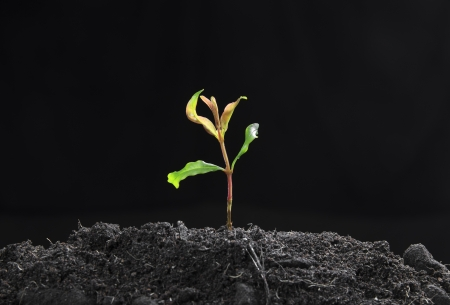 Green sprout growing from seed on soil fertility