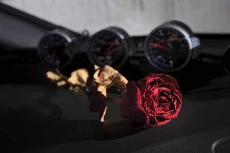 beautiful dry red rose on sport car console, underground feeling photo
